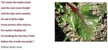 Σε άλικη διάθεση: Σαλάτα με παντζάριακαιπατάτες