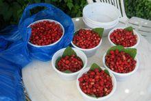 Άγριες φράουλες της Κέρκυρας