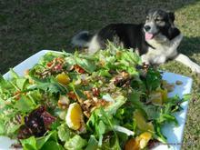 Πράσινη σαλάτα με πορτοκάλι, λιαστή ντομάτα κ καραμελωμένο φιλέ αμυγδάλου-Green salad with orange, sundried tomatoes and caramelised almond flakes