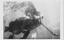 Ψαρόσουπα βλάχου με επιρροές côte d'azur…