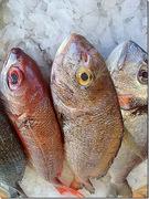 Τι πρέπει να ξέρουμε για τα ψάρια