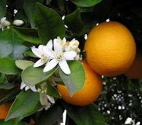 Πουτίγκα πορτοκάλι