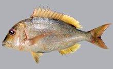 Ψάρι στη λαδόκολλα