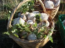 Ζαρκαδίσια μανιτάρια...φρέσκα από το δάσος στο πιάτο μας!
